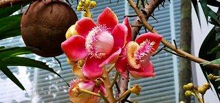 Flowers in the garden of Casuarina Shores